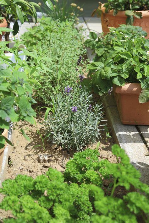 location  herbs gardens   place  herb garden