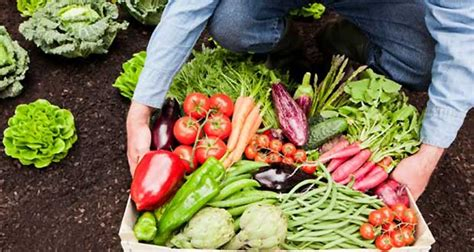 Easiest Vegetables to Grow at Home   CSGlobe