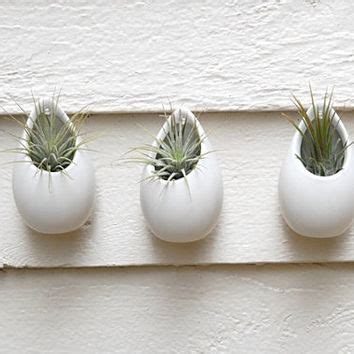 White Ceramic Wall Planter by Shop Hang Plants On Wall On Wanelo