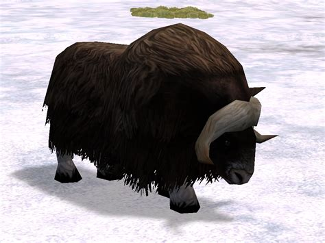 musk ox zoo tycoon  wikia fandom