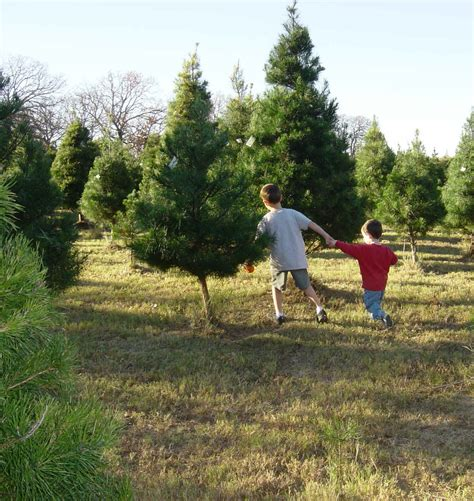 10 texas christmas tree farms that are worth the trip