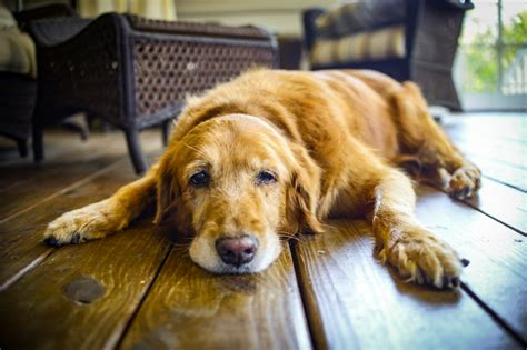 signs of dehydration in dogs dehydration symptoms and signs