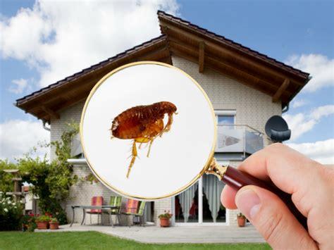 como eliminar las pulgas en casa eliminar las pulgas en casa y adem 225 s de en nuestras mascotas