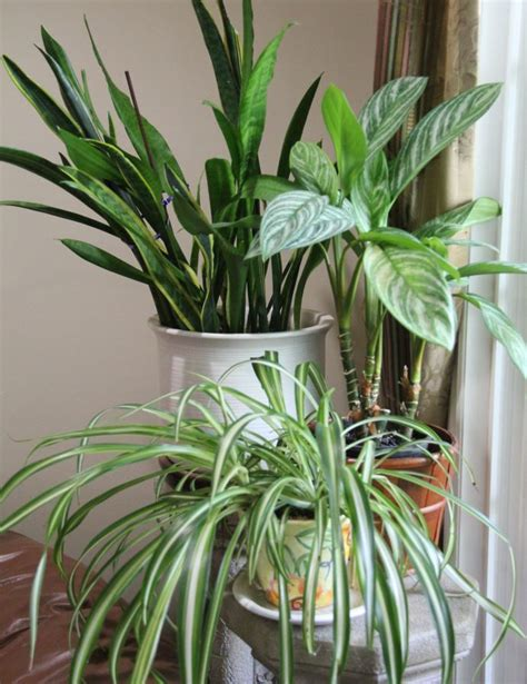 avoid these five common house plant mistakes