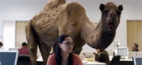 geico camel commercial hump day surviving the week thanks to the geico camel commercial