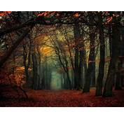 Forest Mist Fall Leaves Trees Path Nature Landscape