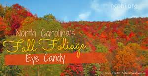 asheville nc and nc mountains fall foliage color nc b b assn