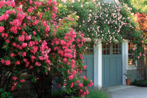 Tips On Planting Quot Climbing Roses Quot On A Rose Trellis My | 6 english garden design ideas how to make an english