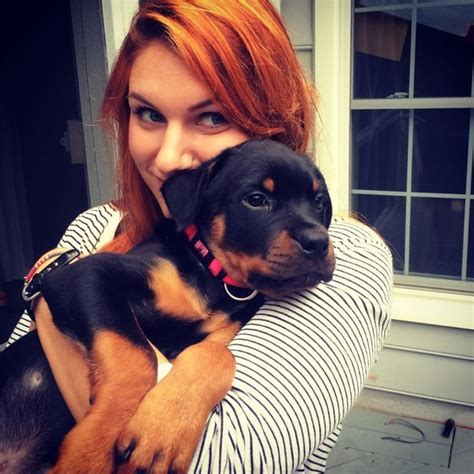 rottweiler reason 30 reasons why rottweilers are the most dangerous pets 30 is so scary