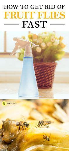 how to get rid of flies in my backyard best 25 fruit fly spray ideas on pinterest fruit fly