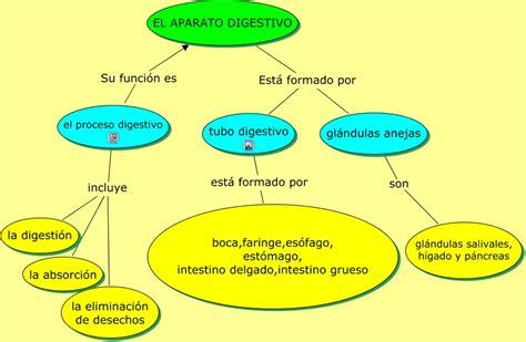 digestivo images aparato que funcion cumple el sistema picture el aparato digestivo funciones del proceso digestivo