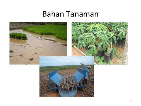 Kecambah Jagung Pakan Ternak pertemuan 1 prinsip dan teknik budidaya tanaman