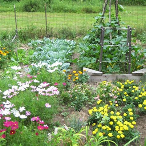 Organic Gardening 101 How To Start A Garden And Keep It How To Start A Botanical Garden