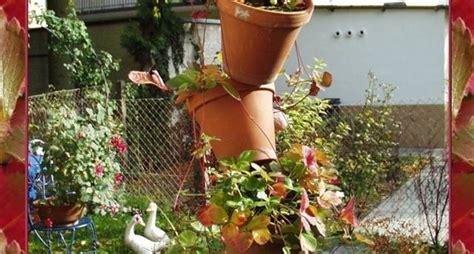 coltivare fragole in vaso fragole in vaso piccoli frutti come coltivare le