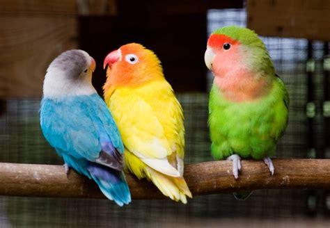 tokopedia hewan 9 binatang peliharaan yang mudah dipelihara pemula