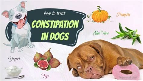 can dogs get constipated top 9 methods on how to treat constipation in dogs naturally