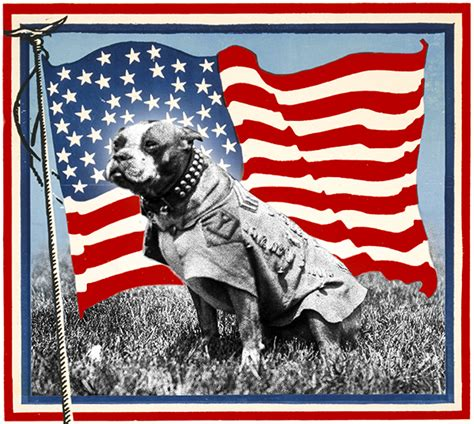 Sergeant Stubby Pictures Meet Sergeant Stubby America S Original Of War Orvis News