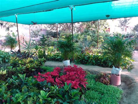 tree plant nursery jaipur thenurseries