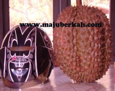 Bibit Durian Bawor Wonogiri investasi durian bawor yang menjanjikan buah durian