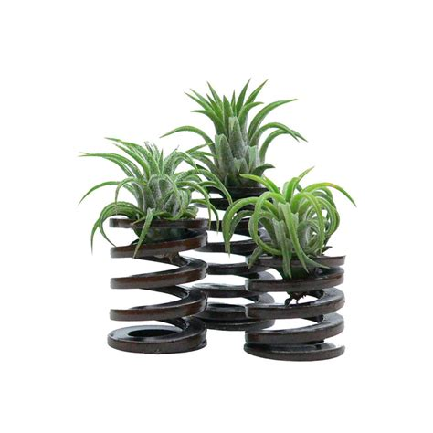plant used as decoration how to decorate with air plants hgtv