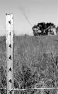 l photography alphabet photography letter quot l quot letters in nature