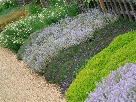 backyard ground cover ideas how to landscape with groundcover diy
