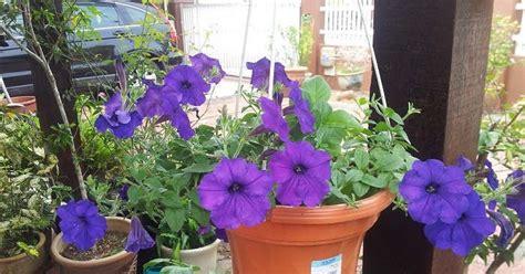 jual pot bunga minimalis tanah liat  pot gantung murah