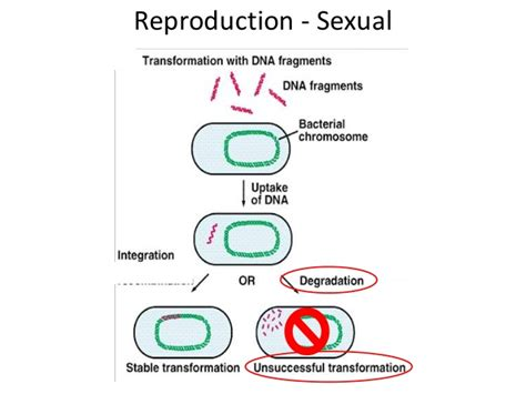 why is sexual reproduction better than asexual reproduction 08 prokaryotes