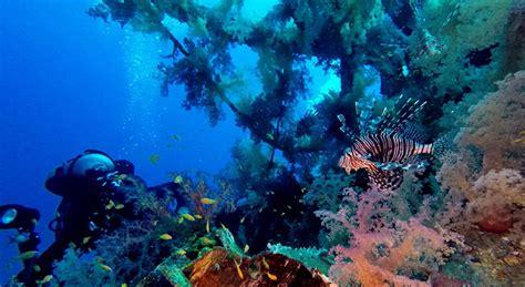 lada subacquea illuminazione subacquea immersioni guida all illuminazione