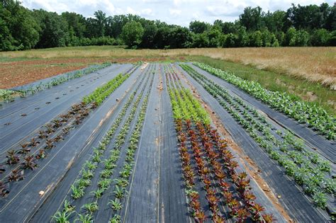 Landscape Fabric Existing Plants Farm Update Forth Farm Of Carolina