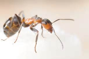 how to get rid of ants in bedroom how to get rid of sugar ants in your bedroom