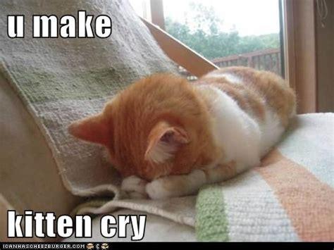 Crying Cat Meme - valentines day memes hot girls wallpaper