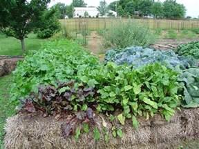 straw bale gardens gardening