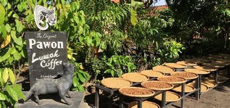 Coffee Bean Jogja foods drinks yogyakarta jogja backpacker s guide