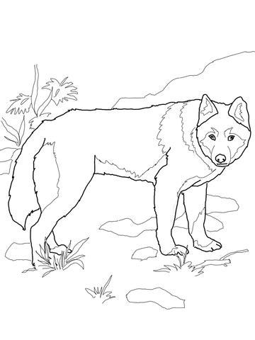 dingo wild dog coloring page supercoloring com