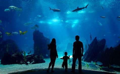 Lu Aquarium 2015 copenhagen s den bl 229 planet aquarium radisson