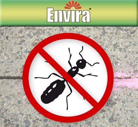 Wirksames Mittel Gegen Ameisen 4931 by Envira Ameisen Mittel 500ml Und 2ltr Top Ameisen Mittel