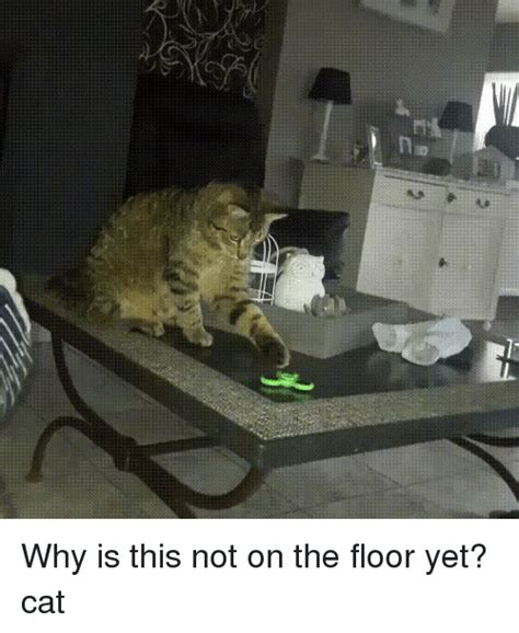 25 best memes about cat why cat why memes