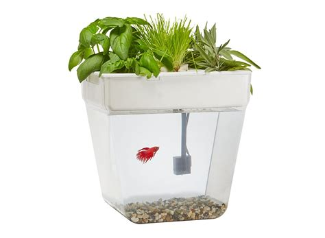 A Fish Tank That Grows Plants On Top Water Garden Back Fish Tank Planter