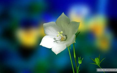 animated flower wallpaper the most beautiful and colorful flowers wallpapers for