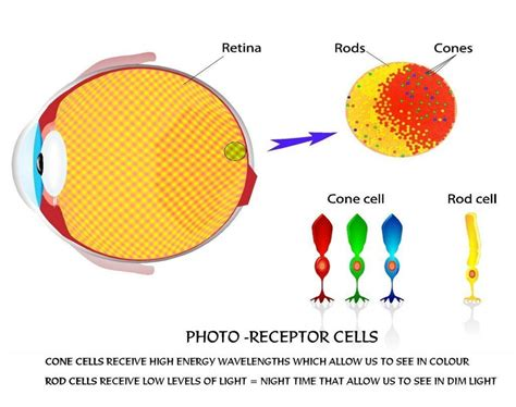 can the human eye see a single photon 187 science abc