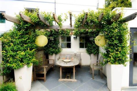 sichtschutz terrasse pflanzen pflanzen sichtschutz terrasse loveer garten