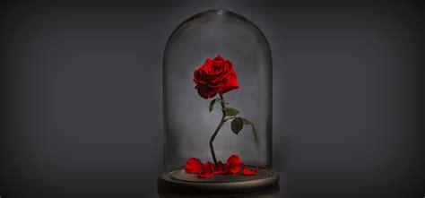 forever roses forever rose