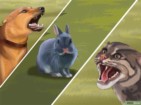 cosa mettere nella gabbia coniglio come preparare la gabbietta per un coniglio wikihow