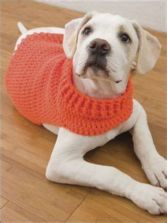 Khimar Simpel Mutiara Non Pet 458 best images about crochet pets on chihuahuas crochet sweater and sweater