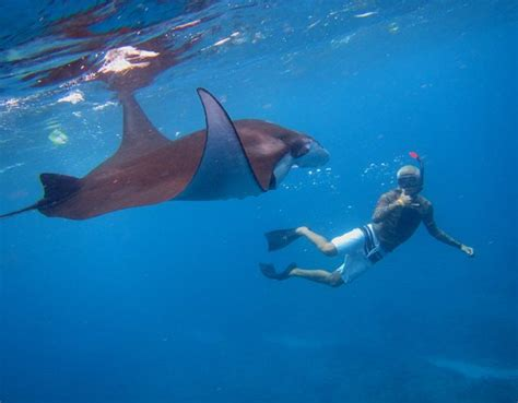 glass bottom boat kona manta rays bali s best priced and quality tours and activities