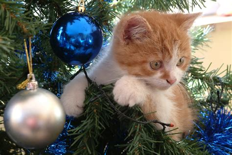 funny wayscto keep cats off christmas tree cats and trees 10 ways to maximize safety minimize catster
