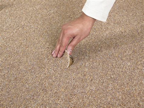 cheap rug cleaning cheap carpet cleaning services and how to avoid them
