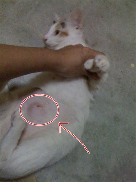 care after spaying complications after spaying noraini suriya mohd arshad s 171 animalcare