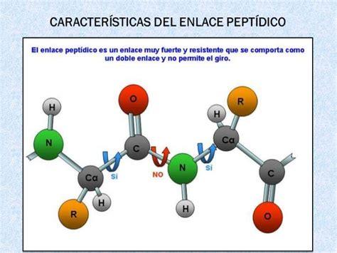 proteinas y su estructura estructura de las proteinas